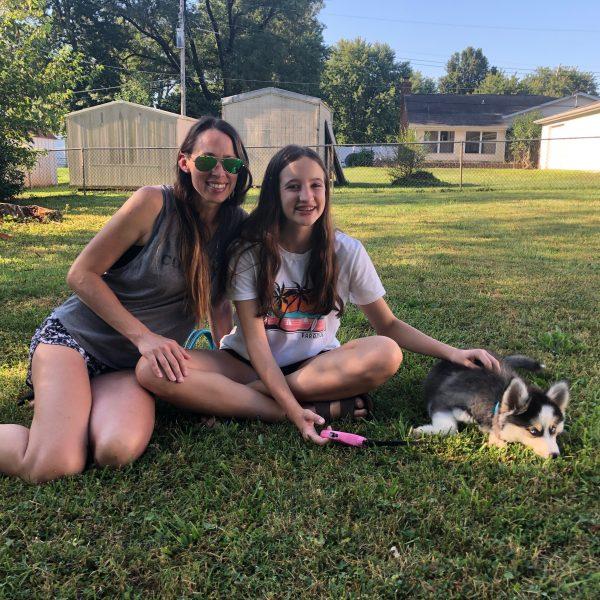 Pomsky Breeders In Marshfield Missouri